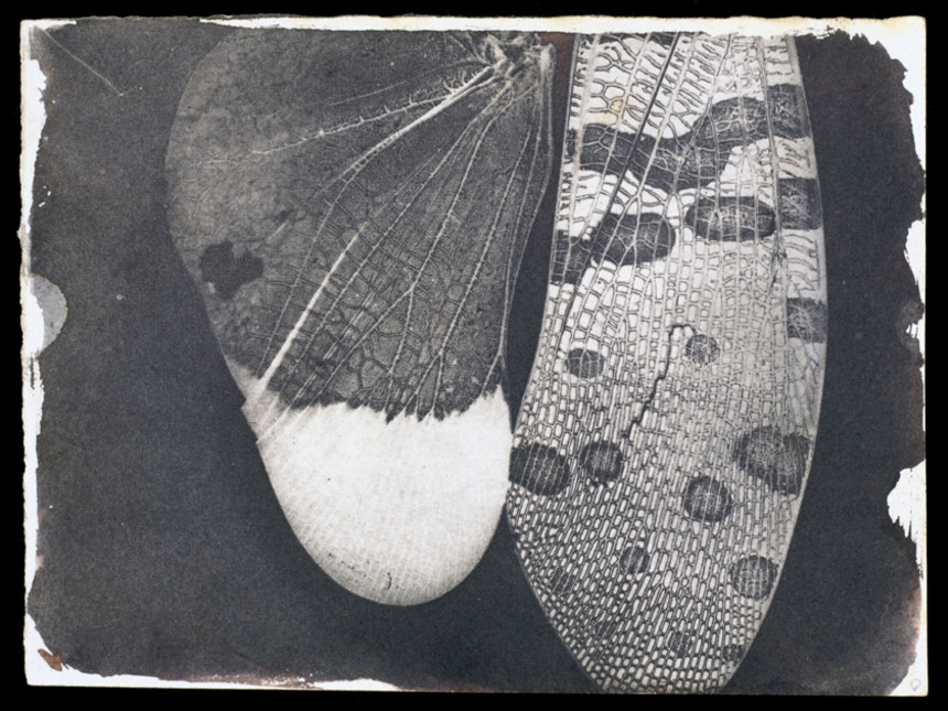 Insect-Wings-c-dot-1840-William-Henry-Fox-Talbot-c-National-Media-Museum-Bradford-slash-SSPL